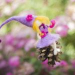 Les songes d'une Violette – Présentation
